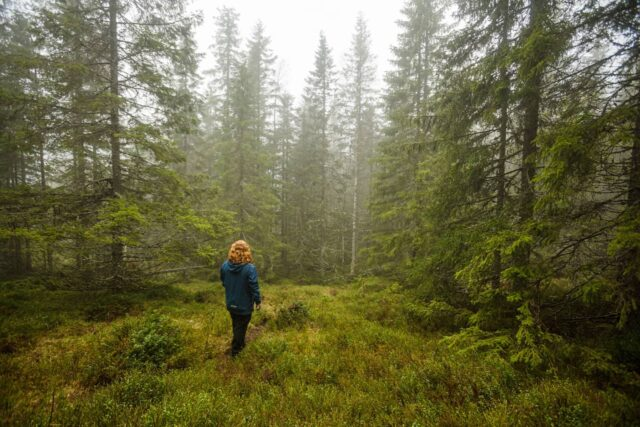 Taking some time off from renovating to relax and explore our surroundings. It may be cold and damp outside, but that's often when the woods are at their finest.  #exploremore #dayoff #Hovfjellet #nature #woods