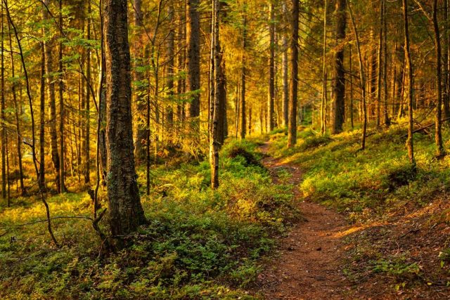 The first rays of sun in the woods are always magical. Most of the world is still asleep and the woods are tranquil and soothing. Sometimes you have to pinch yourself to make sure you're not dreaming. ⁠ ⁠ #woods #nature #forest #trees #naturephotography #wood #photography #hiking #landscape #outdoors #tree #summer #mountains #green #travel #adventure  #photooftheday #art #explore #wilderness #travelphotography⁠